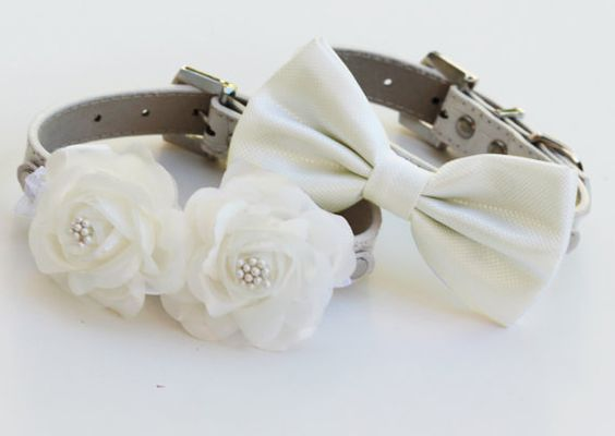 Beautiful collars for your pet on your wedding day
